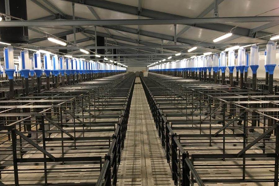pig farm trials