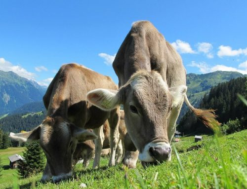 """La Nueva Ley de Sanidad Animal Europea entra en vigor y apuesta por el concepto """"One Health"""""""