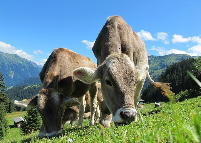 ley de sanidad animal europea