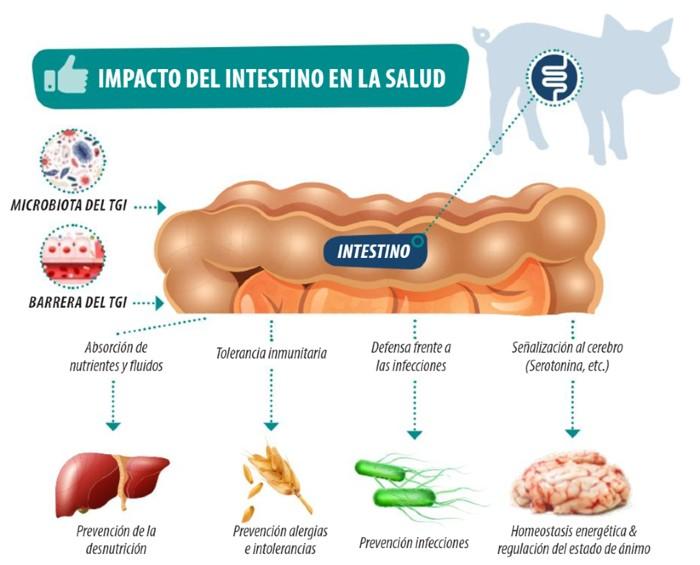 salud intestinal cerdos lechones